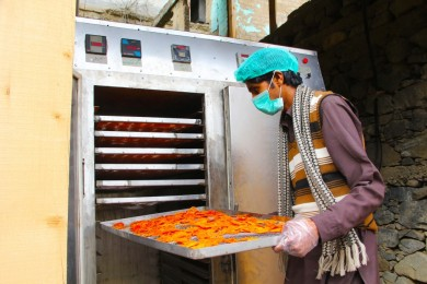 Farmer unloading dried persimmons from an electric dryer in Peochar, Swat