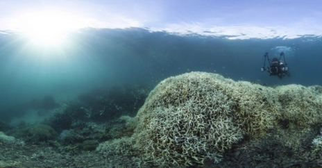 Bleaching occurs when overly warm ocean waters cause coral to expel the algae living inside of it, which turns the coral white and erodes its structures