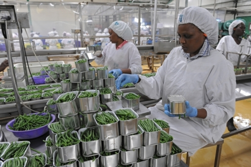 Frigoken Ltd is Kenya's largest exporter of processed vegetables supplying niche products to leading European Supermarket chains