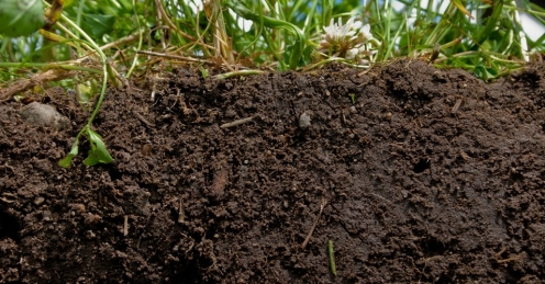 Healthy soil. (Photo- Natural Resources Conservation Service Soil Health Campaign
