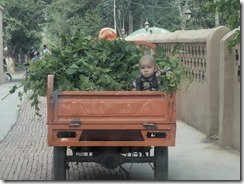 Grape vines are off to Turpan market in the morning, complete with a toddler in a 3-wheeler.